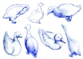 life drawing sketches of ducks at a park