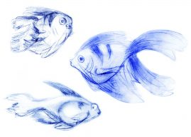life drawing sketches of fish